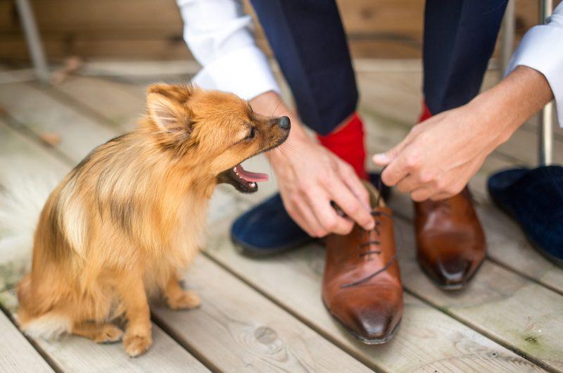 Le chien du marié. Revel.